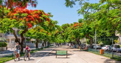 Израильские деревья научились слать СМС