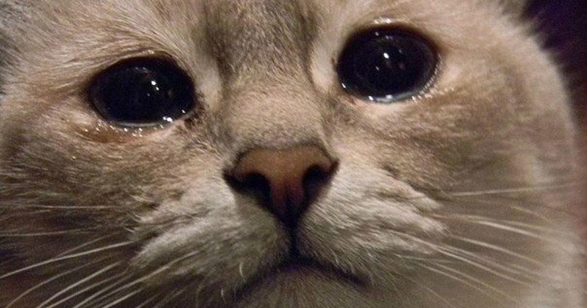 картинки кота и слез плане одежды обуви