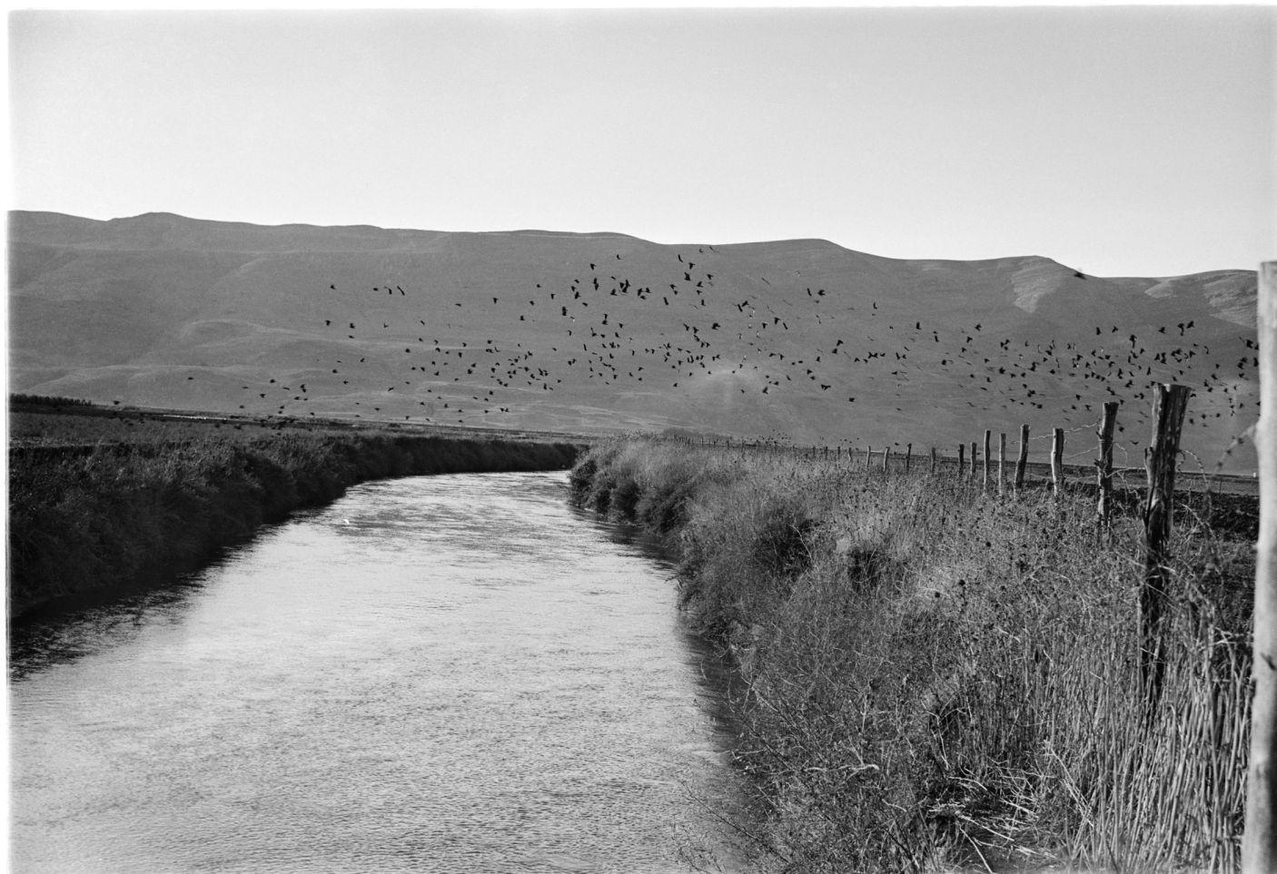 Kfar Blum, 1946. Rudi Weissenstein photo