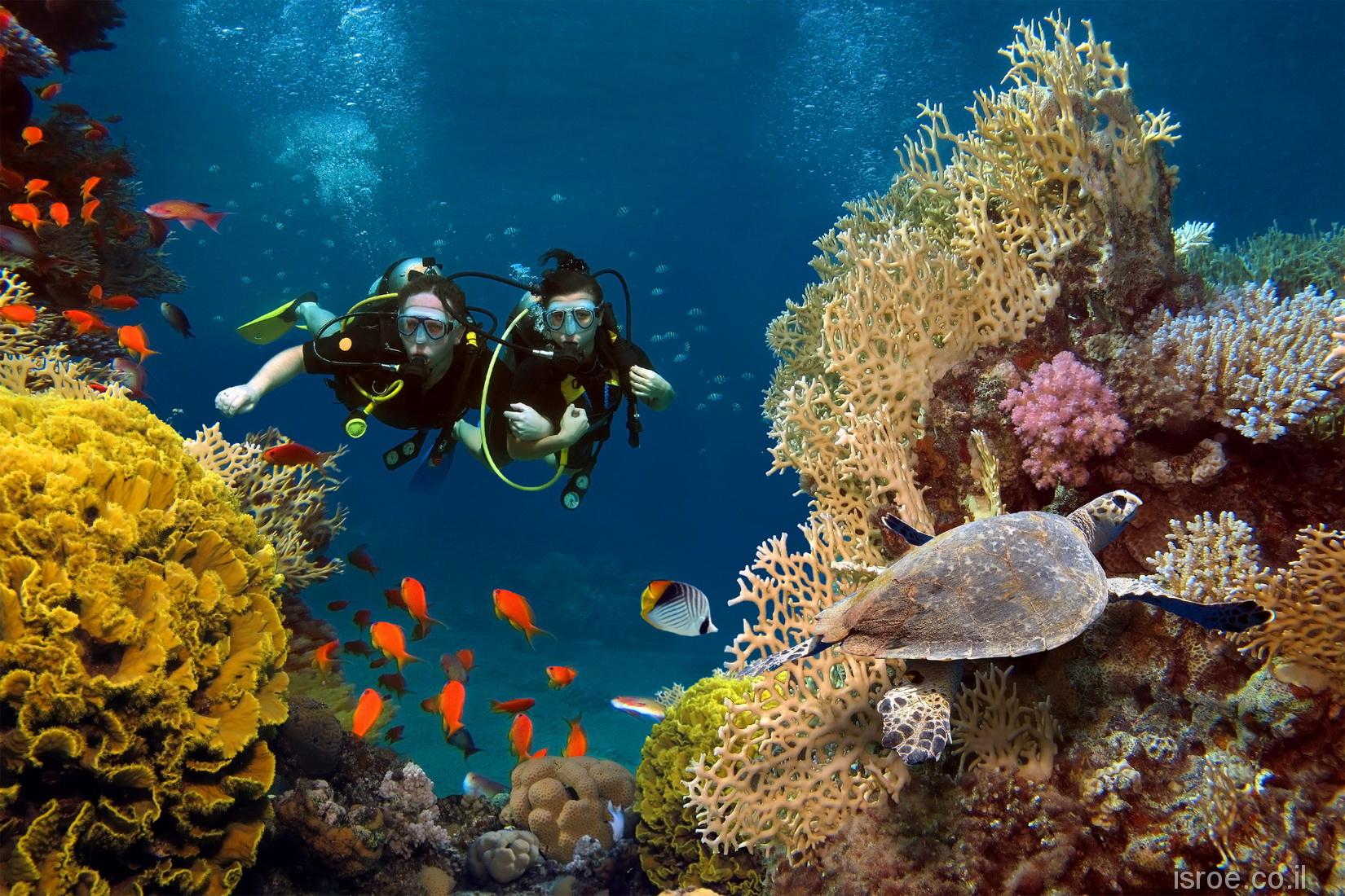 Красное море isroe.co.il
