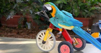 Как одного попугая решил провести в СССР