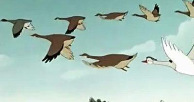 Сирийские ПВО «сбили» стаю диких гусей