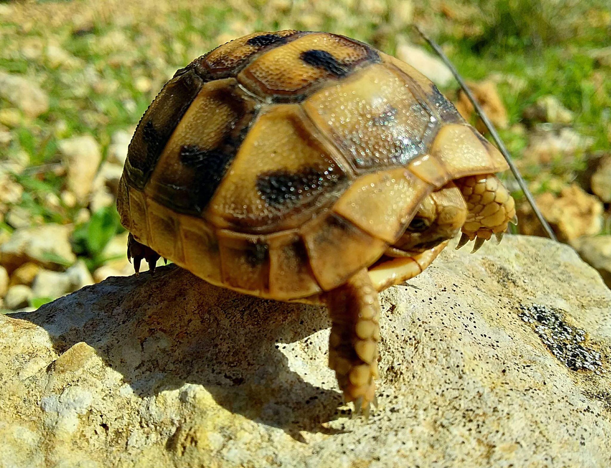 делать картинки среднеазиатских черепах и только этом данное