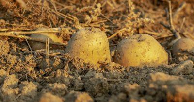 Отравление израильских земель