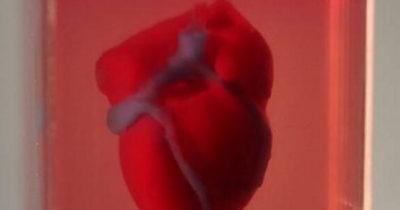 Живое пульсирующее сердце