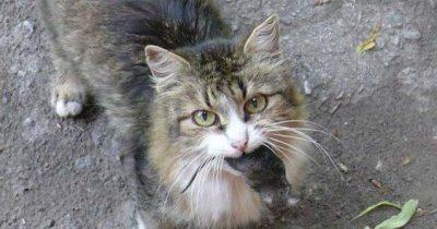 Израиль сегодня отмечает международный день кошек