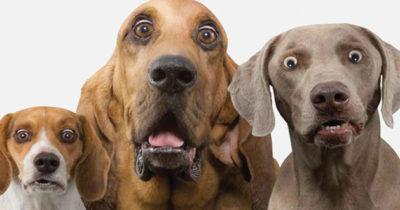 Собаки навлекут на вас проклятие