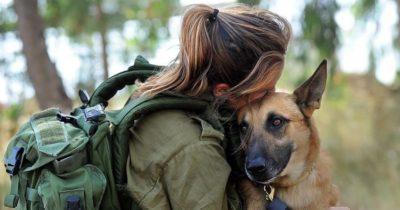 Друзья на поле боя. ЦАХАЛ уважает своих собак