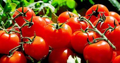 Израильские ученые: овощи «кричат» от боли и жажды. Веганы в шоке