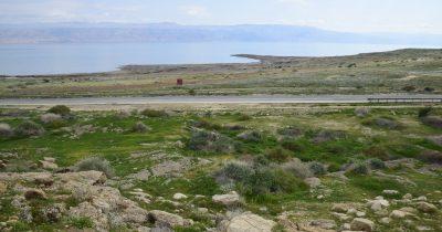 Пустыня расцвела. Произошло живописное чудо на Мертвом море