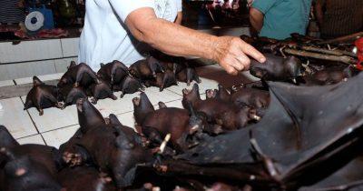 Китай победил коронавирус и снова массово поедают летучих мышей — переносчиков заразы