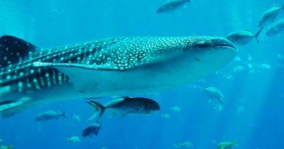 Акула залетевшая на пляж шокировала отдыхающих в Эйлате