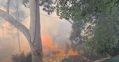 В Хайфе объят огнем район Неве-Шаанан